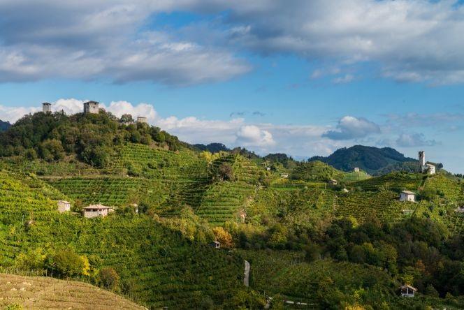 Protocollo viticolo 2016, Conegliano Valdobbiadene sempre più green