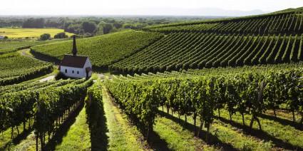 Mondial des vins extremes al via